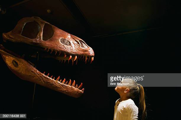 girl (5-7) looking at dinosaur skull in museum - dinosaur stock pictures, royalty-free photos & images
