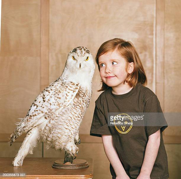 girl (4-6) looking at stuffed owl - chouette blanche photos et images de collection