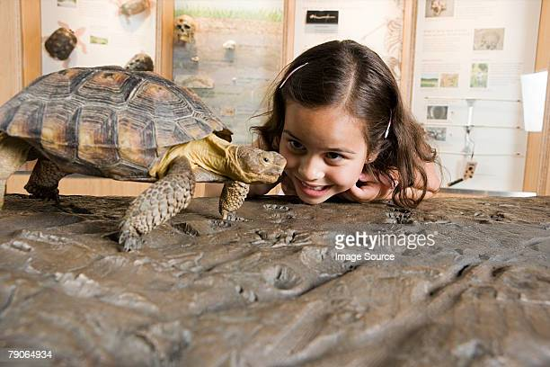 Girl looking at tortoise