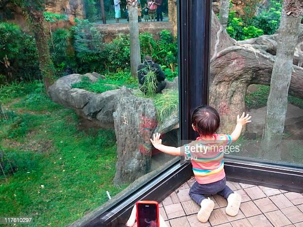 Girl looking through a window
