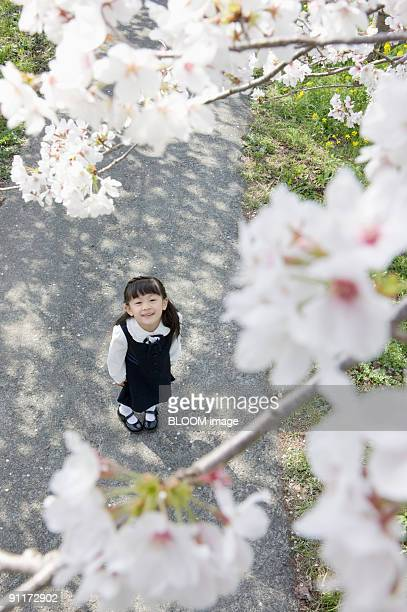 Girl looking up at cherry blossoms, view from above