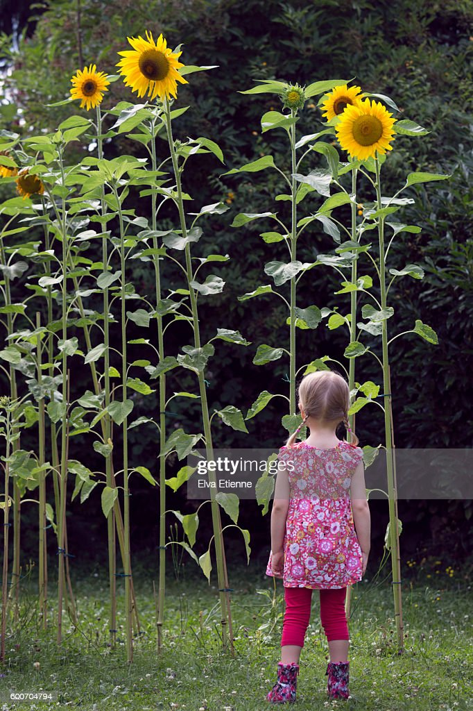 Girl Looking Up At Tall Sunflowers Stock Photo | Getty Images