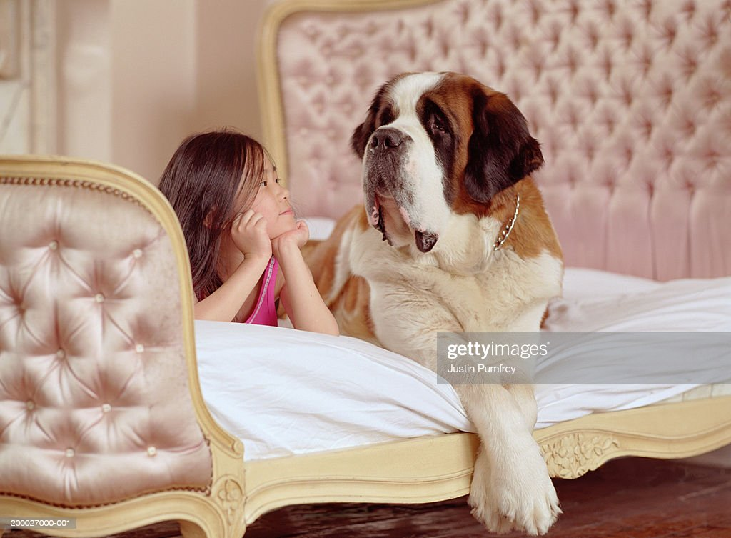 Girl (6-8) lying on bed next to St. Bernard dog : Stock Photo