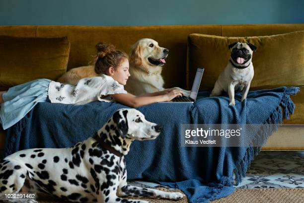 girl lying on sofa & typing on laptop with 3 dogs - three animals stock pictures, royalty-free photos & images