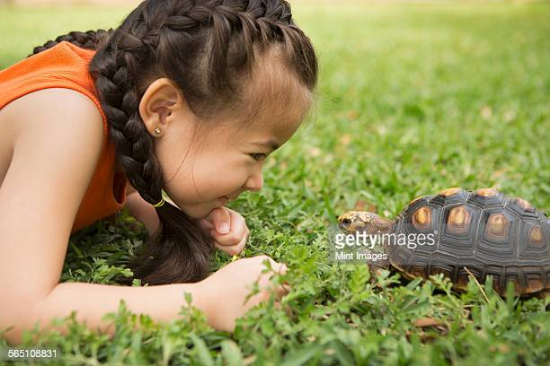 A girl lying on the grass looking at a tortoise.
