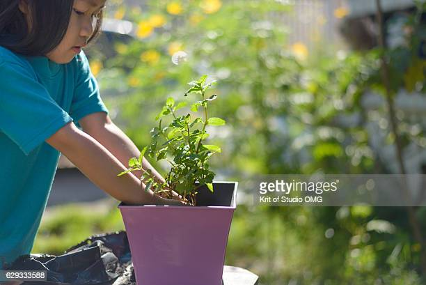 Girl move mint to plant in the pot