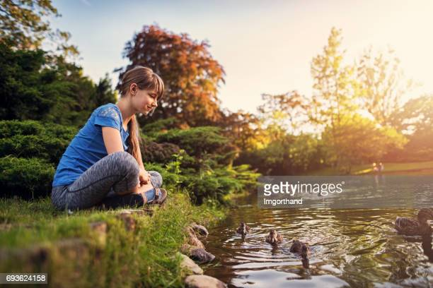 girl observing ducks swimming in the city park - duck bird stock photos and pictures