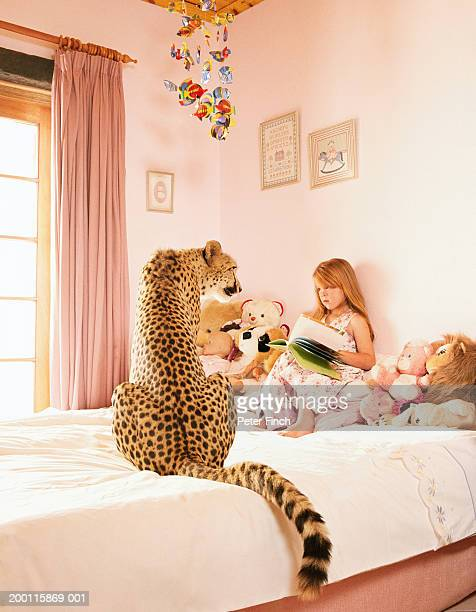 Girl (5-7) on bed, face to face with cheetah (Acinonyx jubatus)