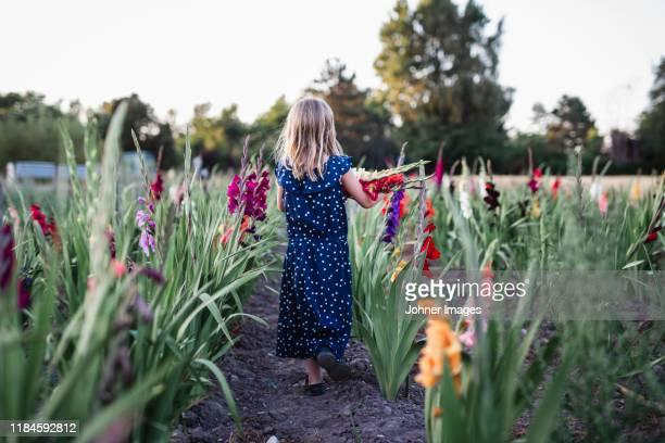 girl on gladioli field - グラジオラス ストックフォトと画像