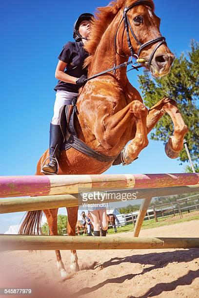girl on horse crossing obstacle on course - incidental people stockfoto's en -beelden