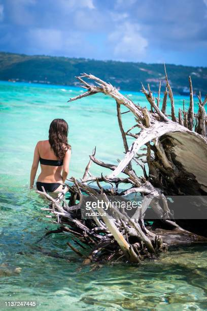 girl on the palm tree - 北マリアナ諸島 ストックフォトと画像