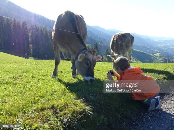 Girl Photographing Cow While Grazing On Field