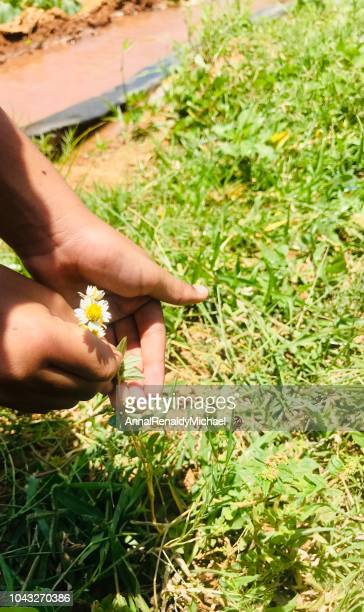 Girl picking a daisy and a ladybug on the grass next to her hands