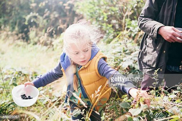 girl picking blackberries - foerageren stockfoto's en -beelden