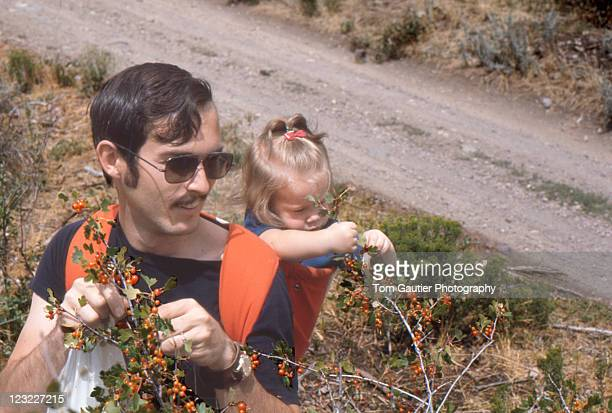 Girl picking currant berries with dad