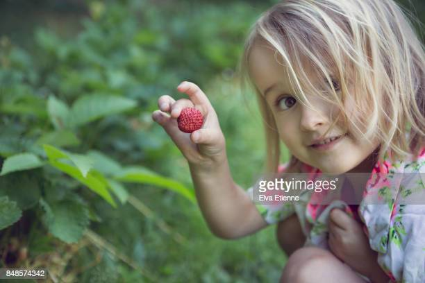 girl (4-5) picking fresh strawberries - environmental issues stock pictures, royalty-free photos & images