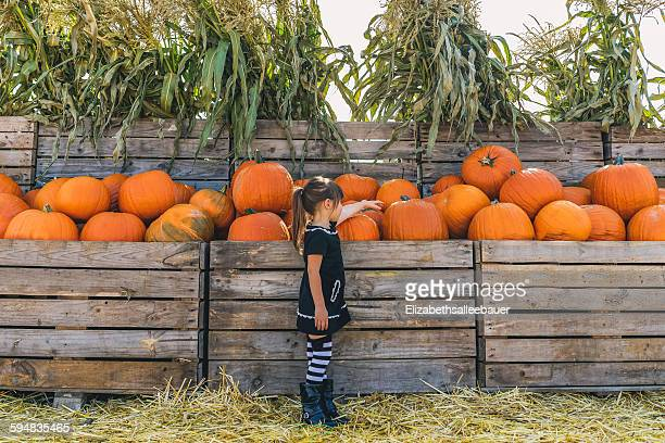 Girl picking out pumpkins at pumpkin farm