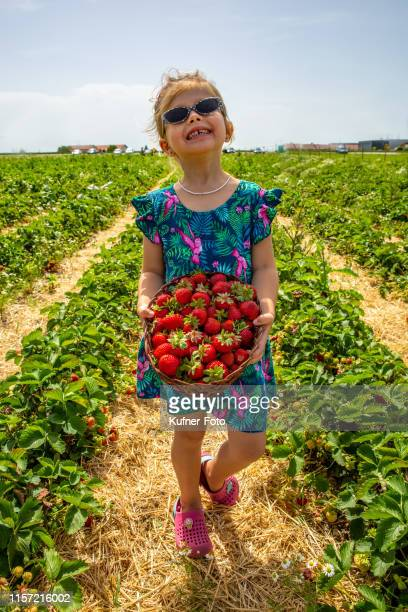 girl picking strawberries - kleid stock pictures, royalty-free photos & images