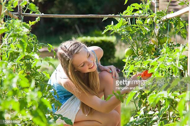 ragazza scegliere di pomodori all'aperto - tre quarti foto e immagini stock