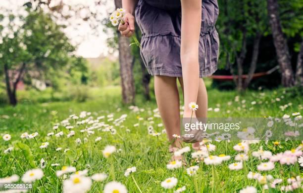girl picking wild flowers - fleurs des champs photos et images de collection