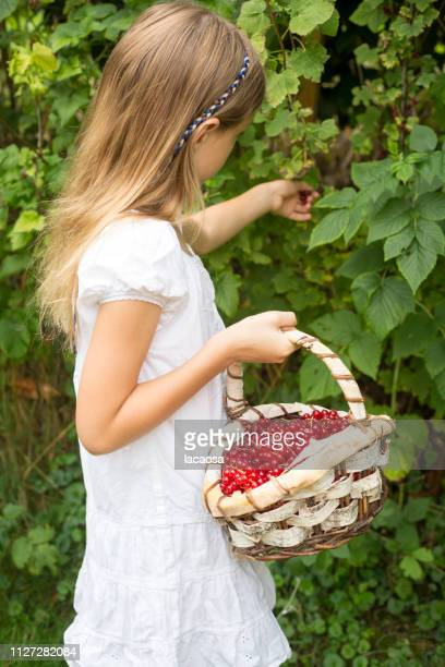 girl picks currant berries