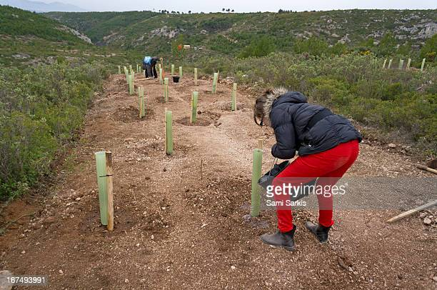 girl (10) planting young trees in nature - オーバーニュ ストックフォトと画像