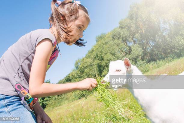 Girl playing and feeding the goat.