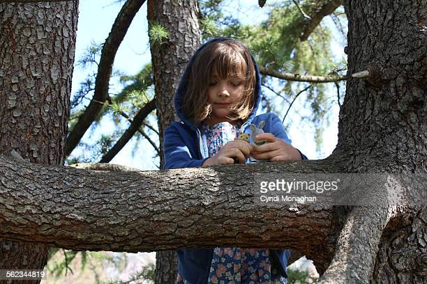Girl Playing in Tree