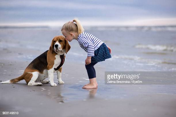 girl playing with dog while standing at beach - ビーグル ストックフォトと画像