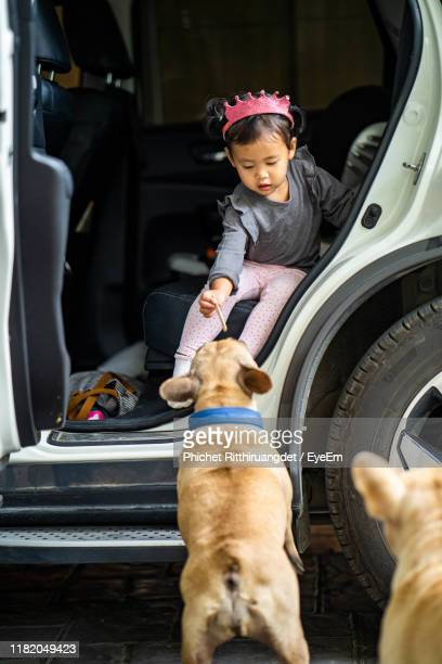 girl playing with dogs while sitting in car - phichet ritthiruangdet stock photos and pictures