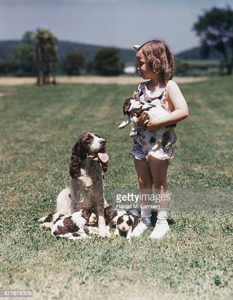 girl playing with puppies while mother dog looking at her  - pawed mammal stock pictures, royalty-free photos & images