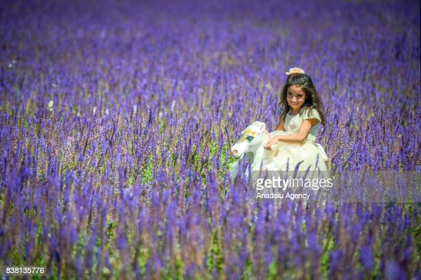 A girl plays with her toy in purplish wild flower garden in Edremit district of Van Turkey on August 23 2017