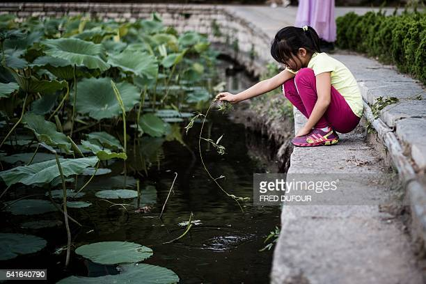 A girl plays with water lilies at Daming Lake in Jinan Shandong province on June 17 2016 Jinan is also called the 'Spring City' for its wellknown...