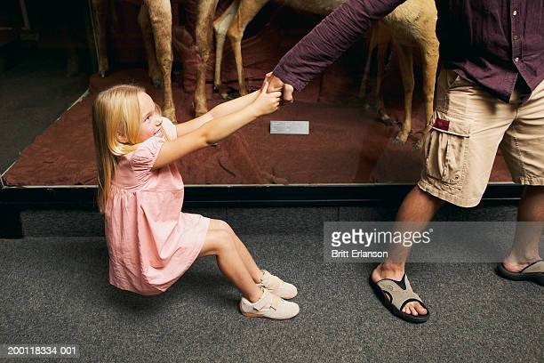 girl (5-7) pulling on man's hand in museum - pulling stock pictures, royalty-free photos & images