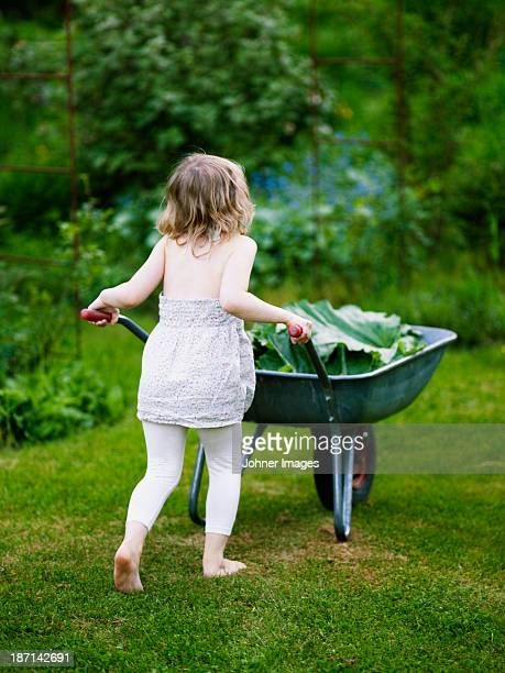 Girl pushing wheel-barrow with rhubarb leaves