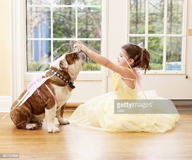 Girl Putting Tiara on British Bulldog