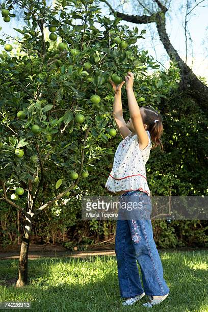 girl (6-7) reaching for fruit on tree, side view - resourceful stock pictures, royalty-free photos & images