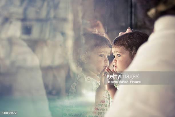 girl reflection - dierentuin stockfoto's en -beelden