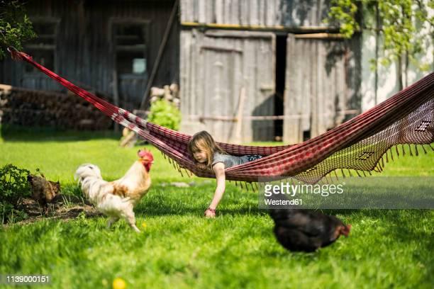 girl relaxing in hammock in garden of a farm with chicken in foreground - agrarbetrieb stock-fotos und bilder