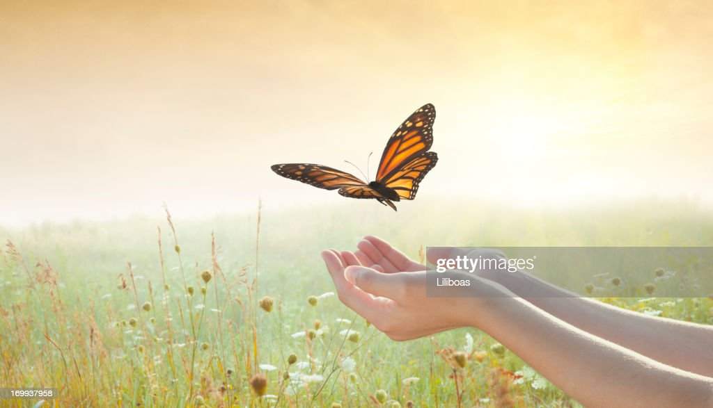 Girl releasing a butterfly : Stock Photo