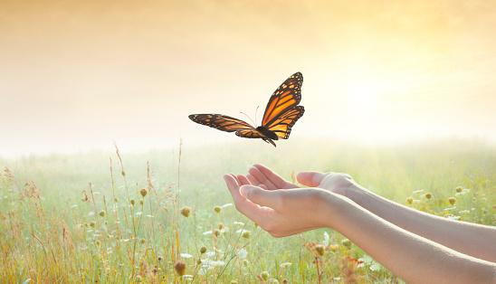 Girl releasing a butterfly 169937958