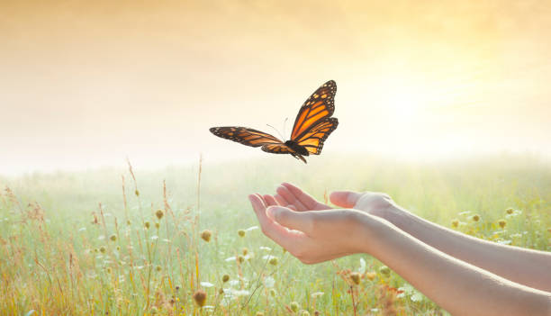 girl releasing a butterfly - free images without copyright stock pictures, royalty-free photos & images