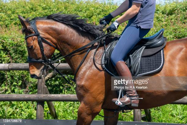 girl riding her bay horse in a riding menage - side view stock pictures, royalty-free photos & images