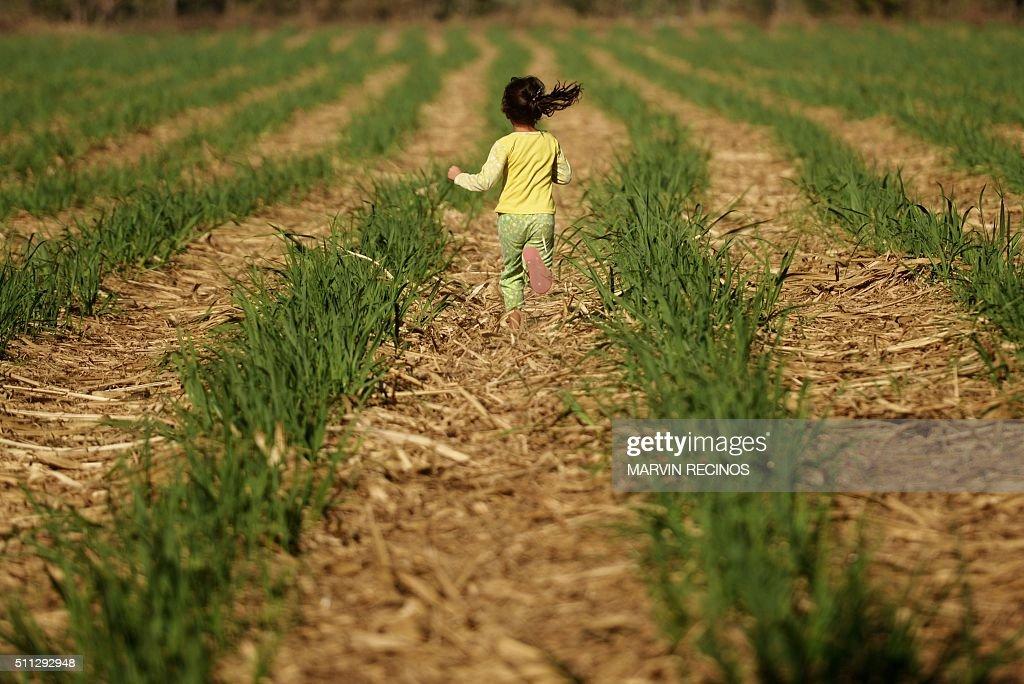 EL SALVADOR-AGRICULTURE-SUGARCANE : News Photo