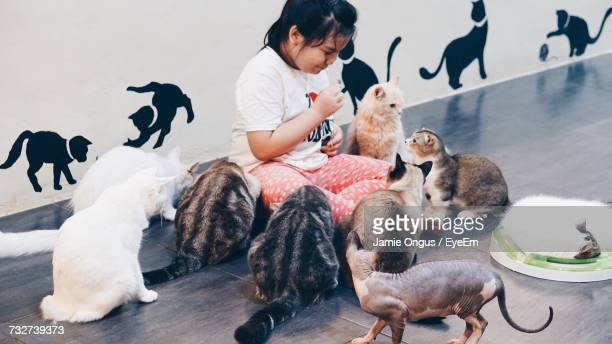 girl sitting amidst cats on floor - medium group of animals stock pictures, royalty-free photos & images