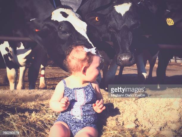 Girl Sitting By Cows