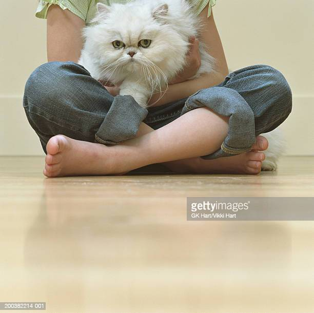 girl (4-6) sitting cross-legged on floor holding white persian cat - persian girl stock photos and pictures
