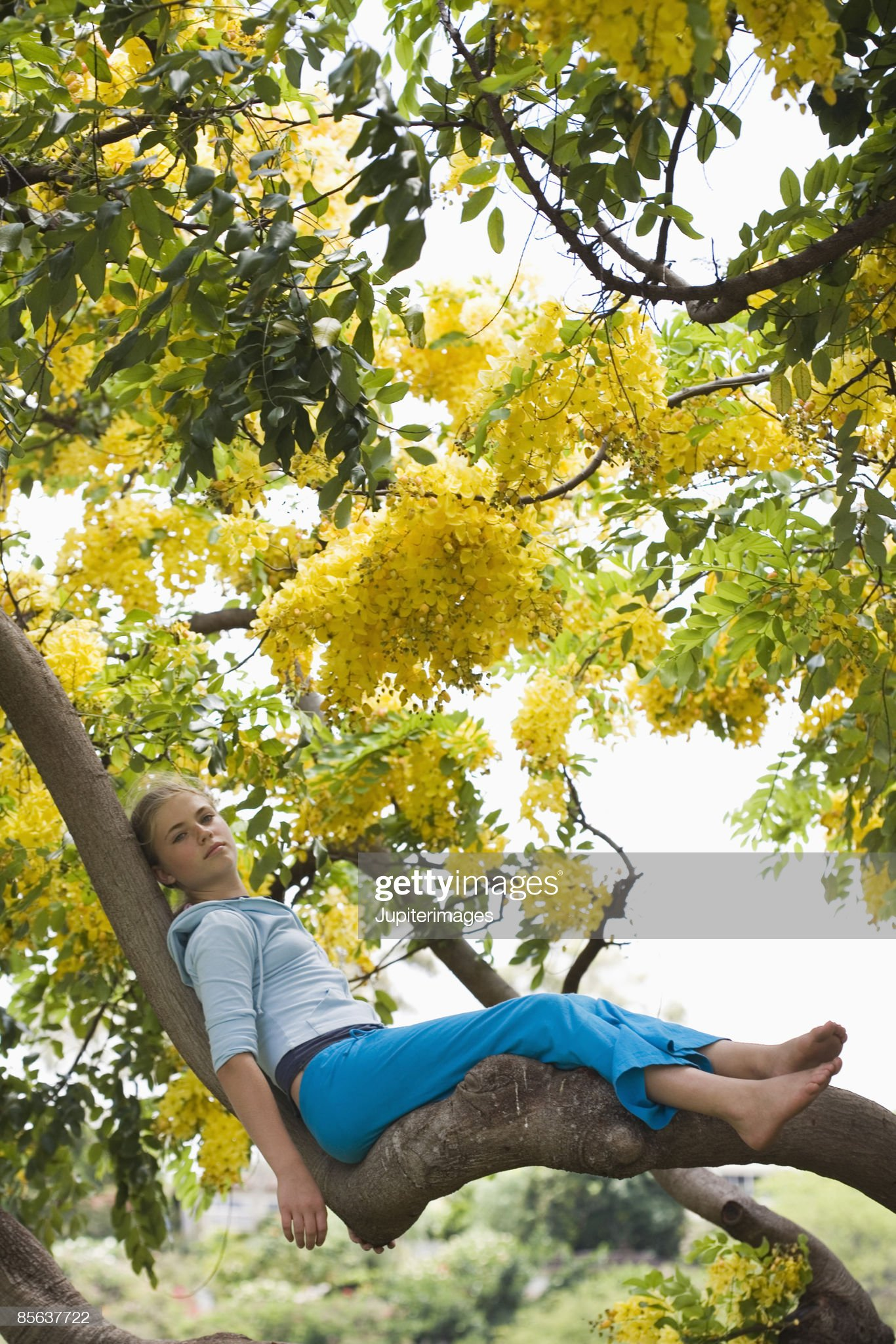 https://media.gettyimages.com/photos/girl-sitting-in-tree-picture-id85637722?s=2048x2048