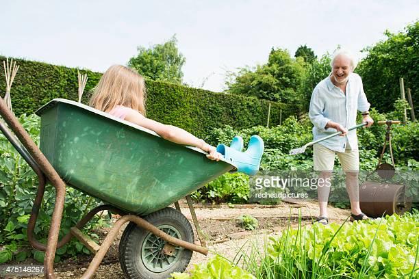 girl sitting in wheelbarrow, grandfather gardening - jardinier humour photos et images de collection