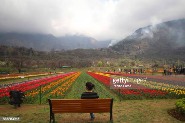 A girl sitting on a bench in Asias largest Tulip Garden on Saturday in Srinagar Indian Controlled Kashmir on April 1 2017 Indira Gandhi Memorial...